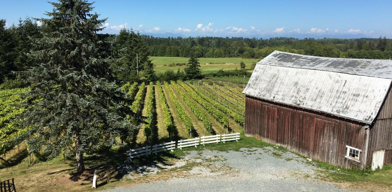 Vineyard and Barn at Vista D'oro Farms & Winery Langley British Columbia Canada